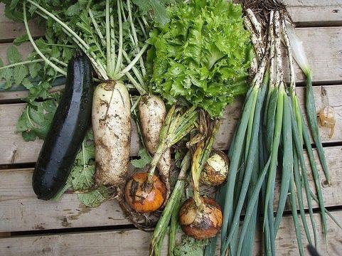 マクロビ用の野菜