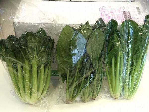 無農薬栽培の葉物野菜