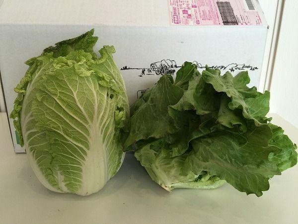 無農薬白菜とレタス