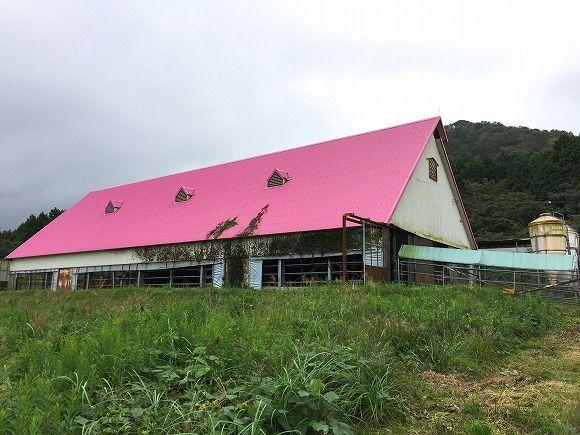 むつみ牧場の牛舎(外)