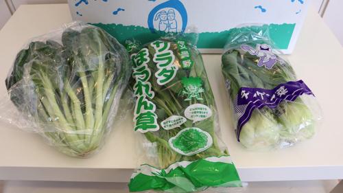 信州の葉物野菜