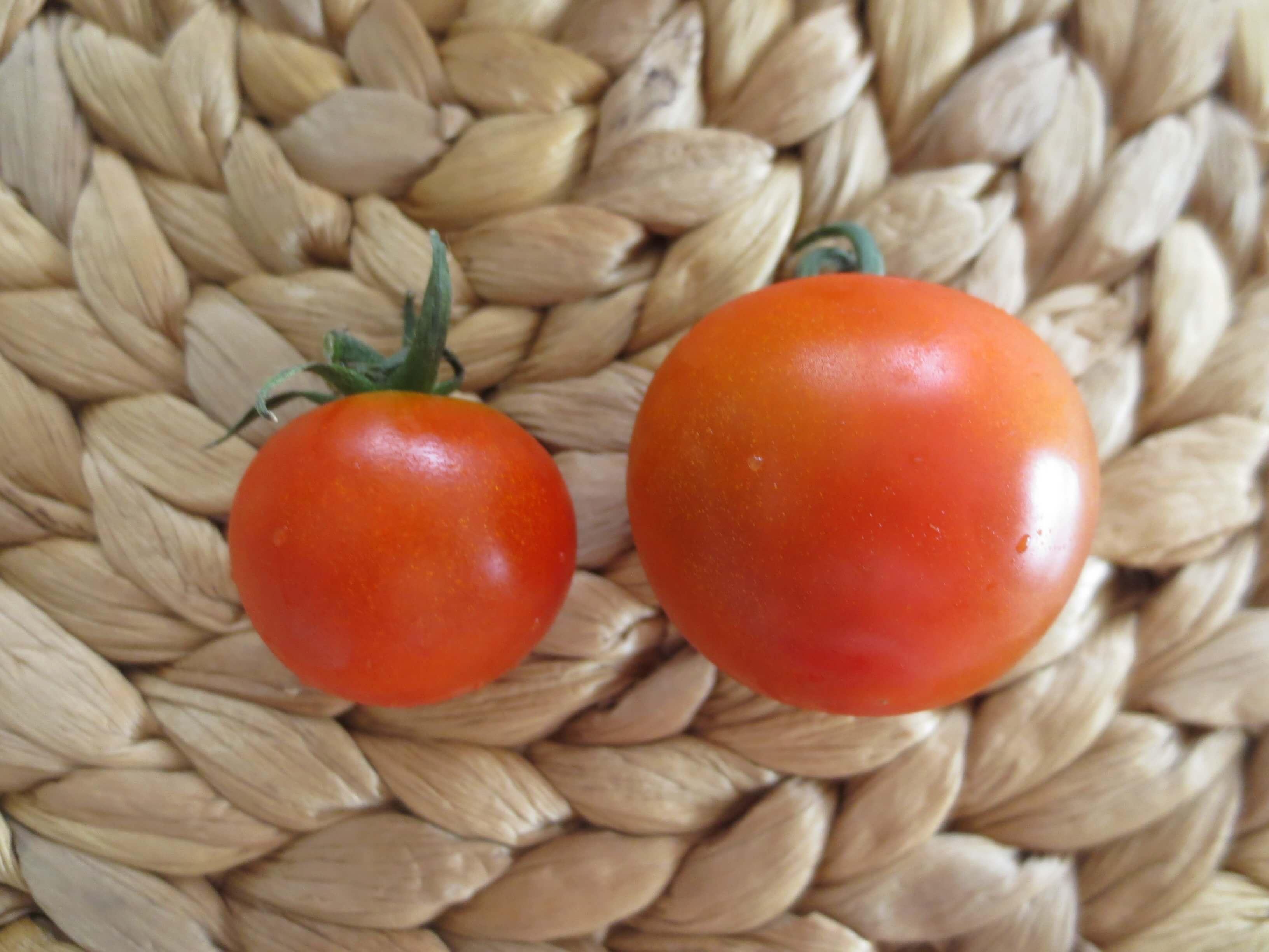 無農薬野菜のミレーお試しセット口コミ6