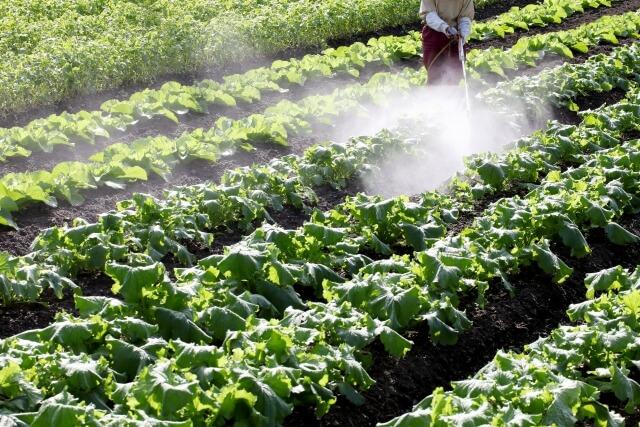 有機野菜、無農薬野菜、減農薬野菜違い8