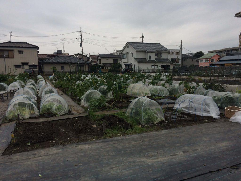 シェア畑見学と入会・口コミ・評判10