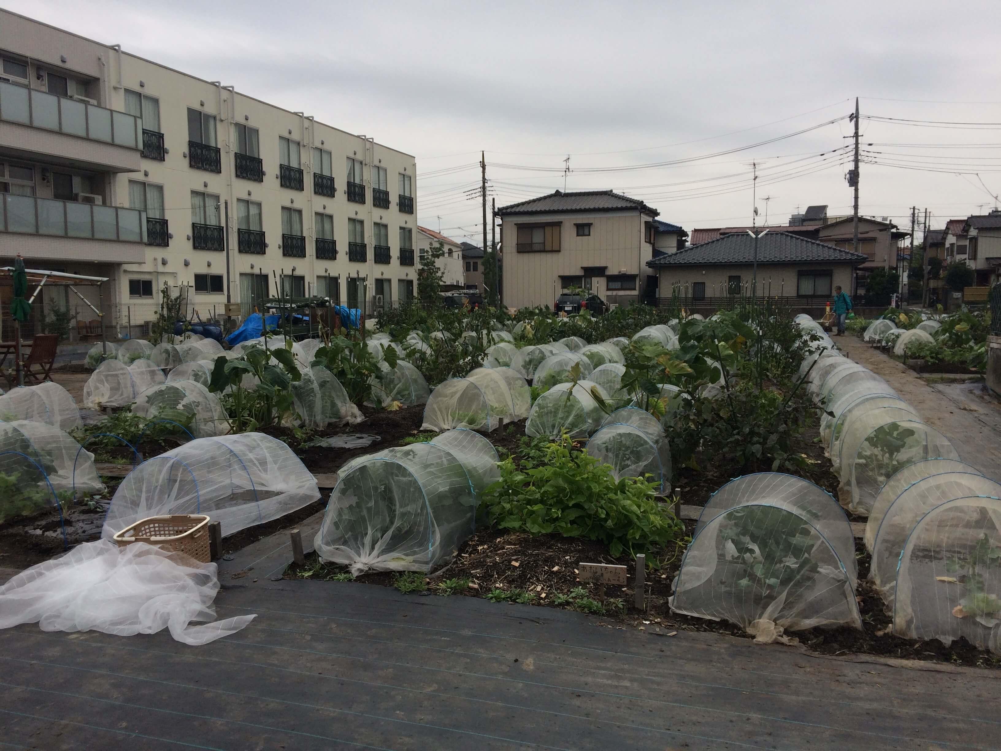 シェア畑見学と入会・口コミ・評判25