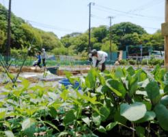 シェア畑の口コミ・有機野菜作り講座19