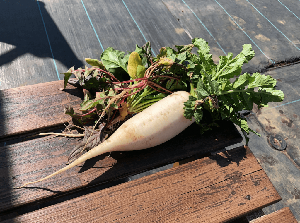 シェア畑・土作り・肥料・ウネの口コミ体験・28