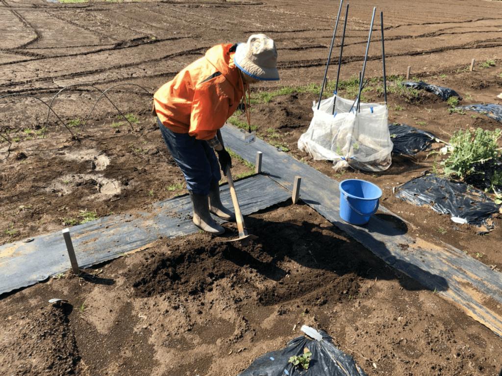 シェア畑・土作り・肥料・ウネの口コミ体験・38