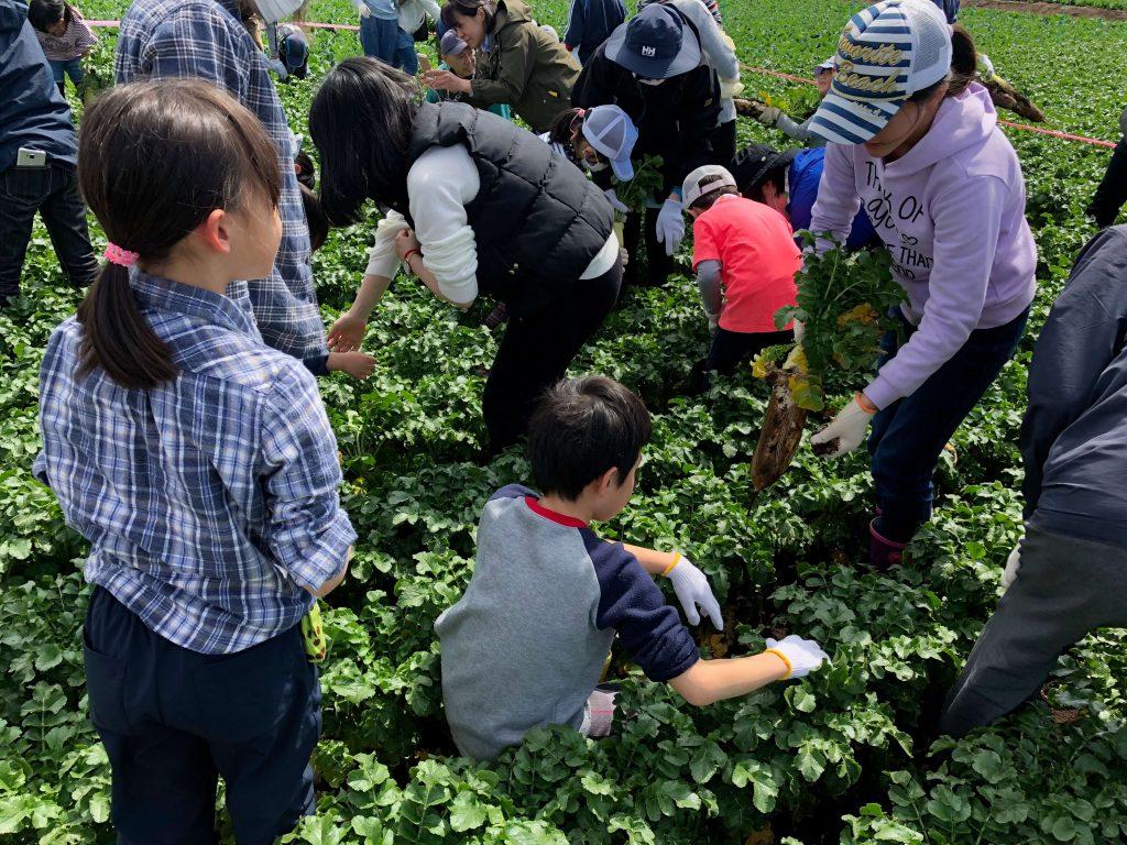 大地を守る会のイベント口コミ体験・大根収穫祭19