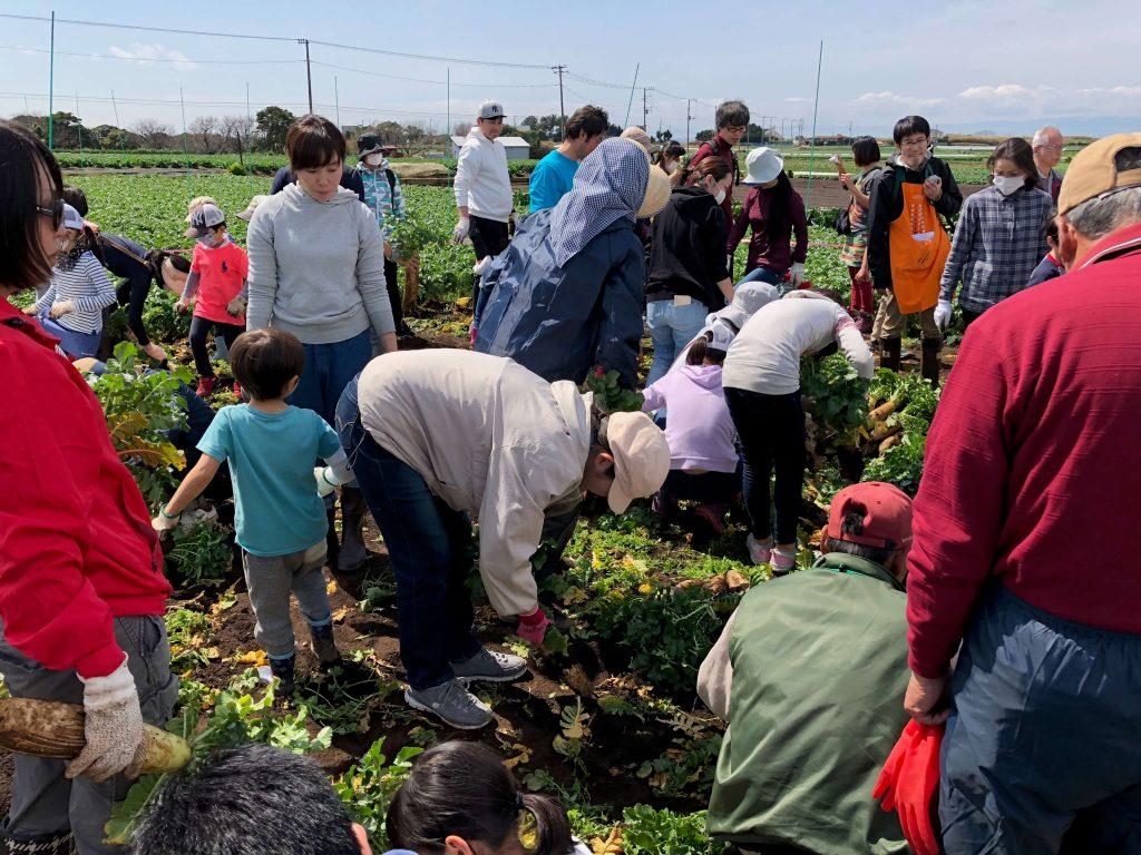 大地を守る会のイベント口コミ体験・大根収穫祭33