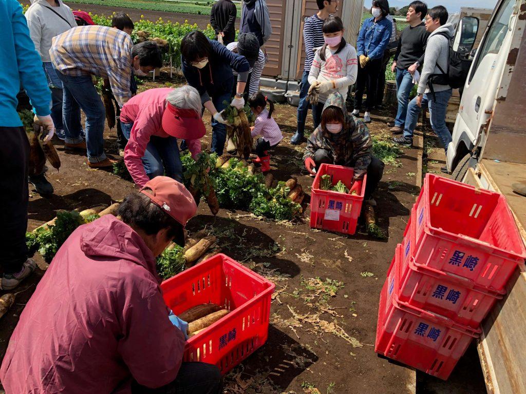 大地を守る会のイベント口コミ体験・大根収穫祭36
