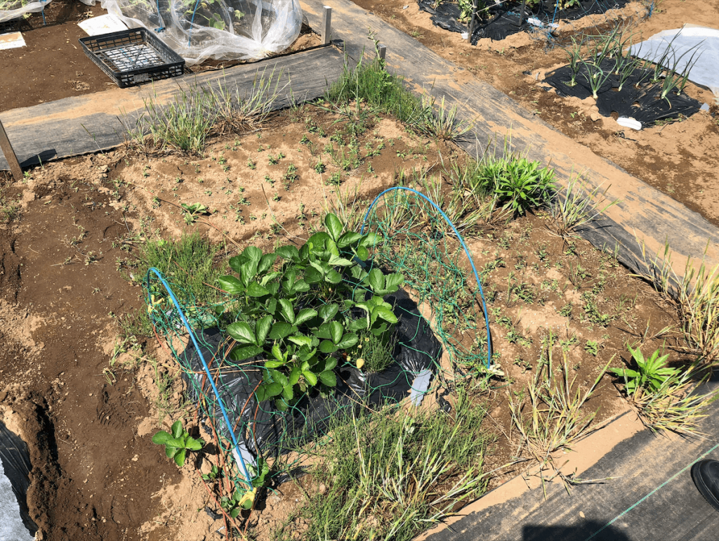 シェア畑・苗種植え付け・口コミと評判37