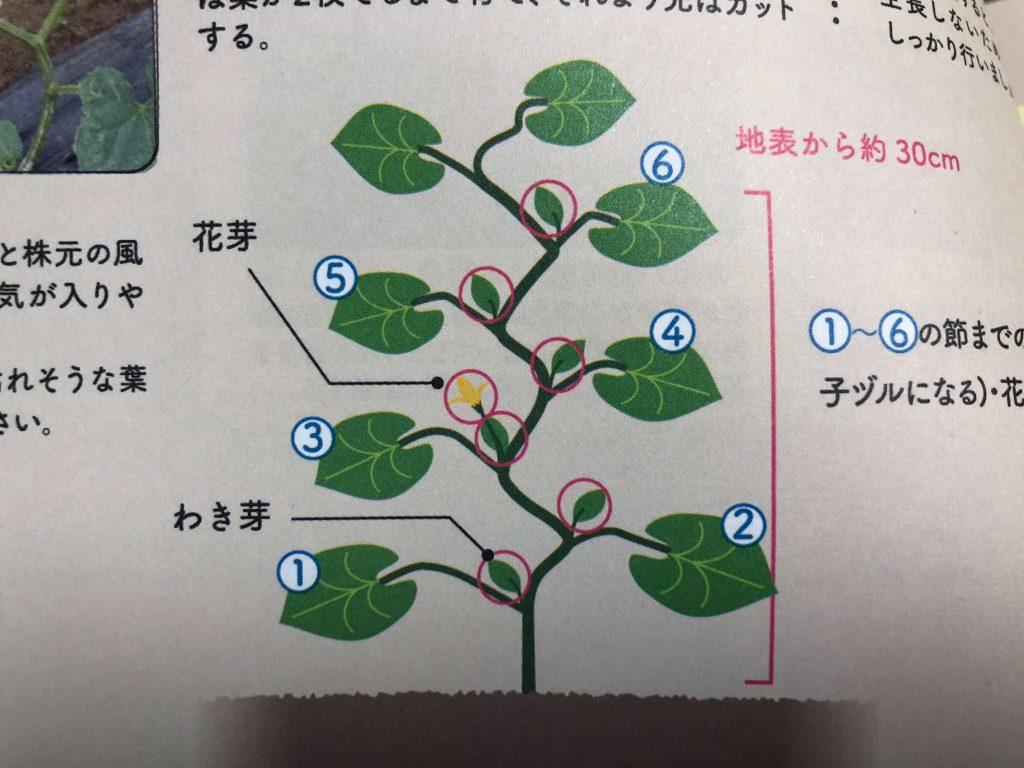 シェア畑収穫・口コミ・評判1