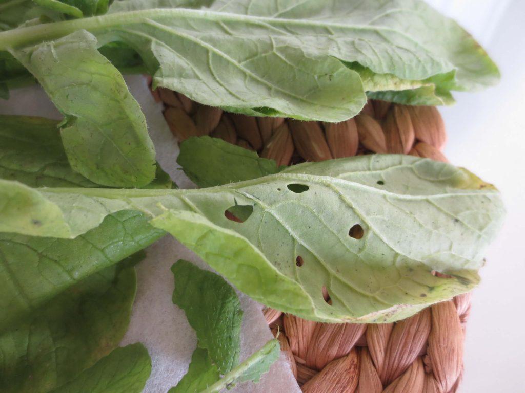 野菜宅配・傷んでいた・虫食いだったときの対応方法4