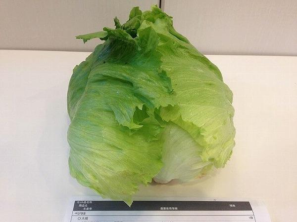宅配野菜のレタス