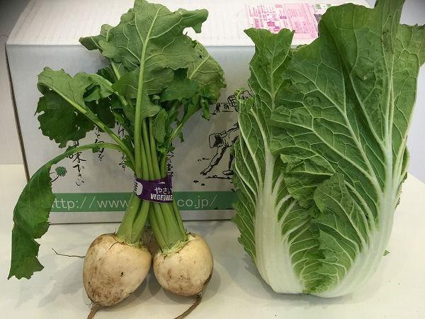 有機かぶと白菜