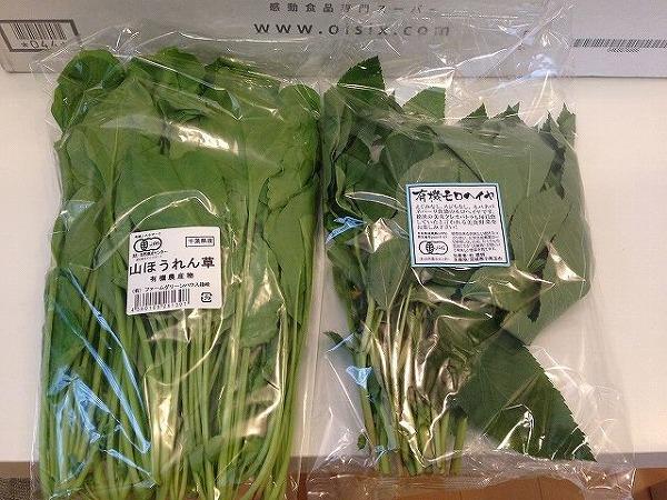 有機ほうれん草とモロヘイヤ~おいしっくすくらぶ4週目