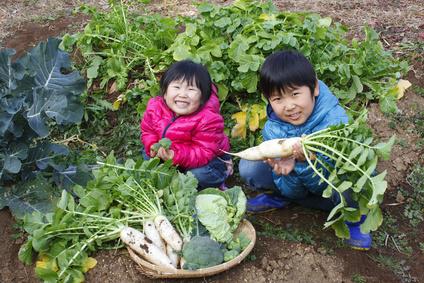 有機栽培の野菜