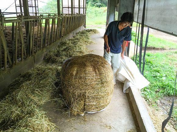 乾燥牧草(1ロール)