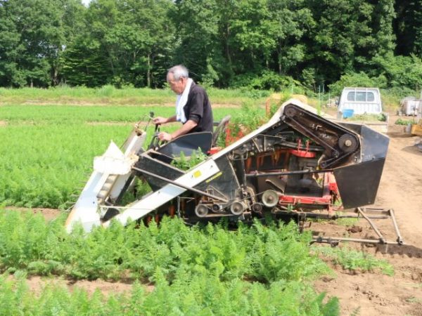 にんじん収穫風景−機械1