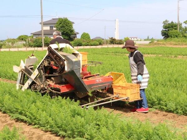 にんじん収穫風景−機械2