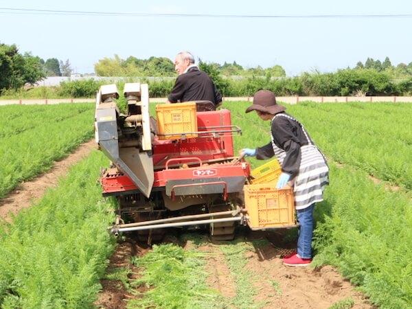 にんじん収穫風景−機械3