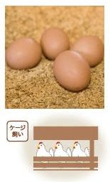 野菜宅配卵ランキング22