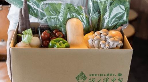 有機野菜宅配の人気のお試しセットの安い順・坂ノ途中2