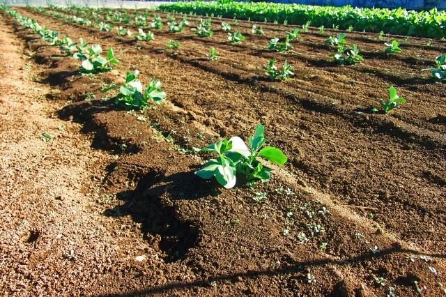 有機野菜、無農薬野菜、減農薬野菜違い7