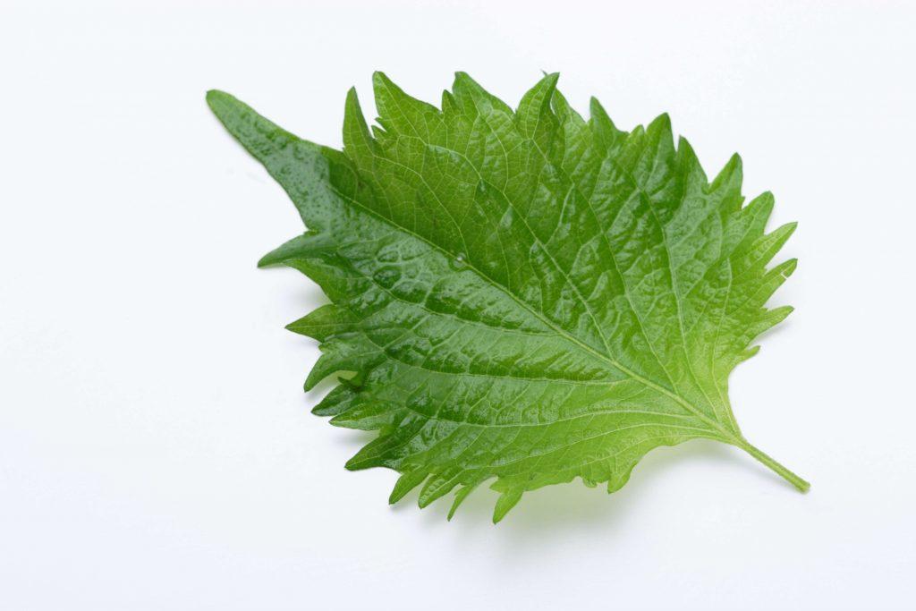 良質な野菜の見分け方・保存方法66