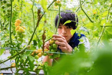 シェア畑の口コミ・有機野菜作り講座16