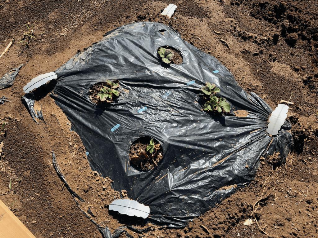 シェア畑・土作り・肥料・ウネの口コミ体験・9