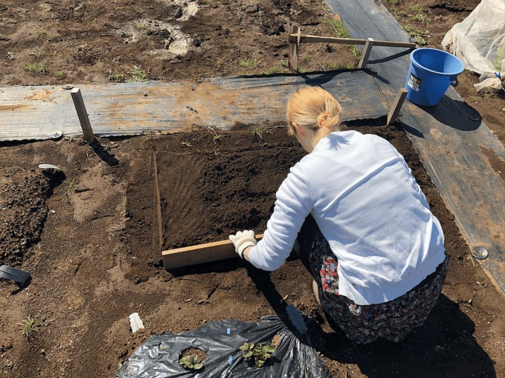 シェア畑・土作り・肥料・ウネの口コミ体験・12