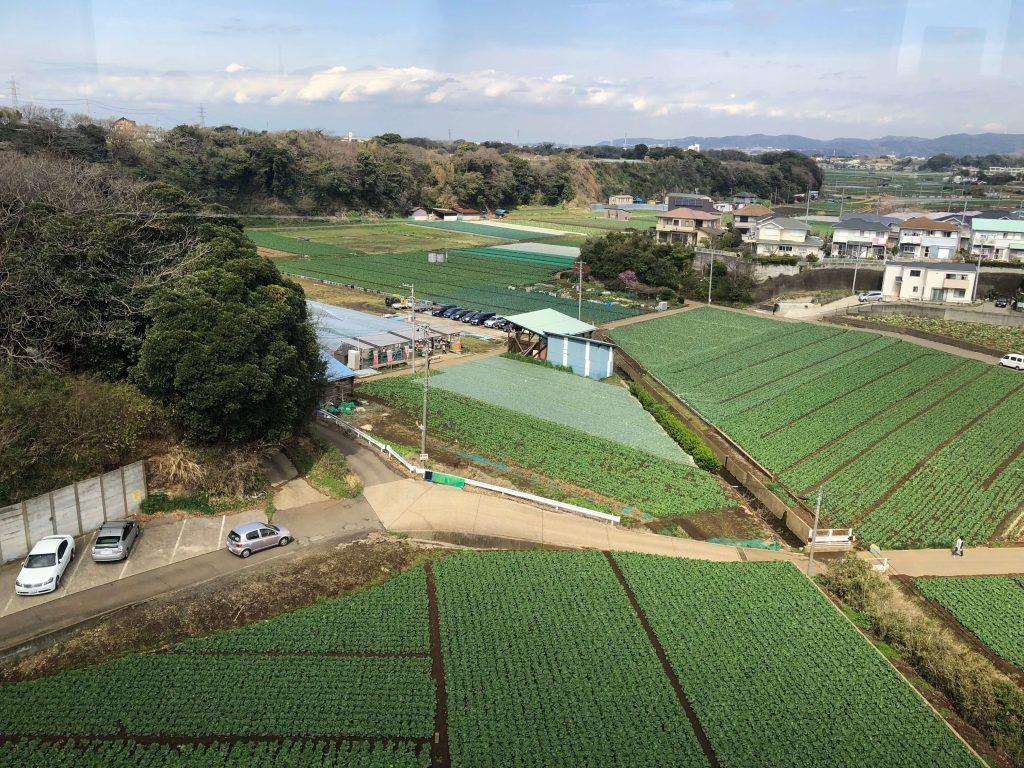 大地を守る会のイベント口コミ体験・大根収穫祭6