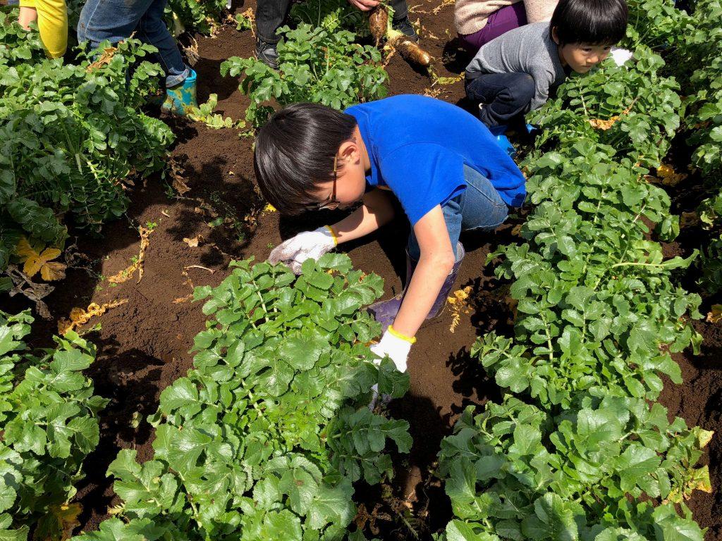 大地を守る会のイベント口コミ体験・大根収穫祭27