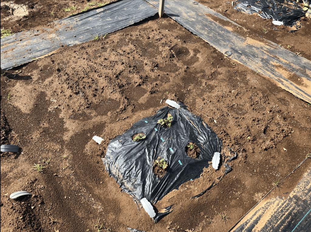 シェア畑・土作り・肥料・ウネの口コミ体験・1