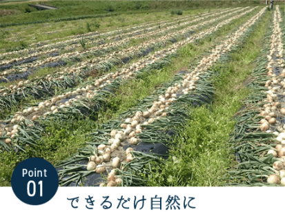 九州逸(くすいち糸島ジタリアンベジタブル・感想と口コミ4