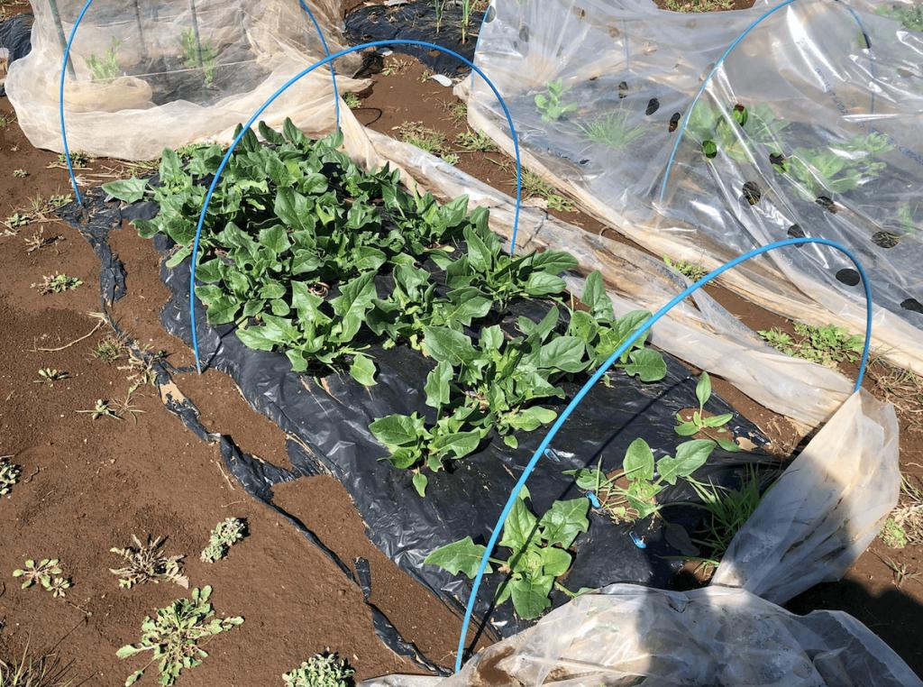 シェア畑・土作り・肥料・ウネの口コミ体験・26