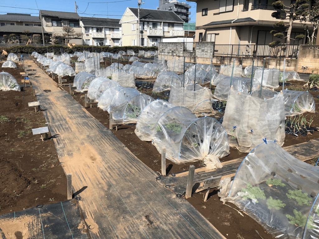 シェア畑・土作り・肥料・ウネの口コミ体験・2