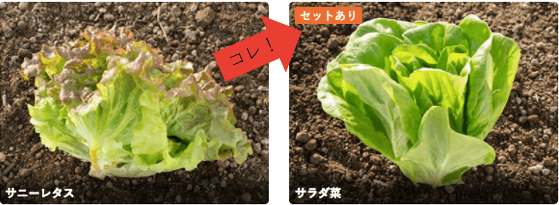 楽天ラグリ(Ragri)口コミ・評判・メリット・デメリット11