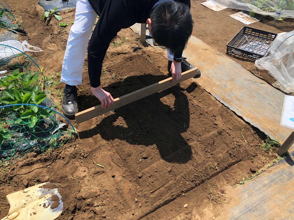 シェア畑・苗種植え付け・口コミと評判3