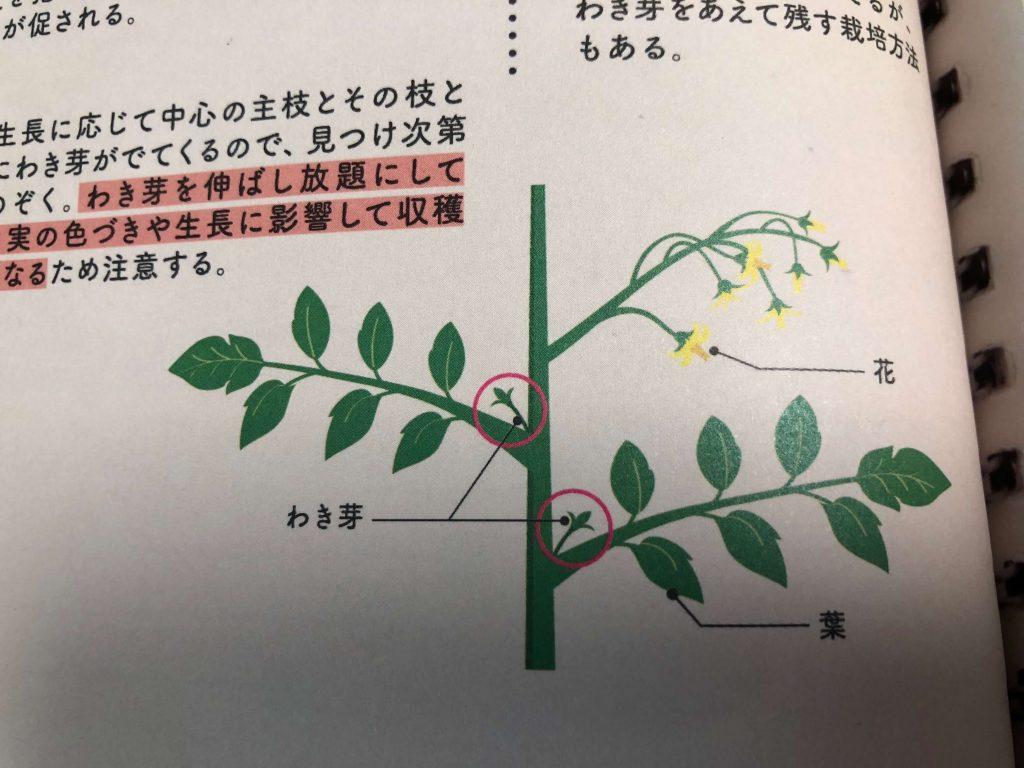 シェア畑収穫・口コミ・評判2