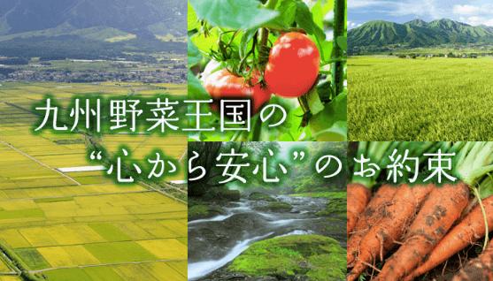 九州野菜王国の口コミ・比較ランキング・お試しセット体験談14