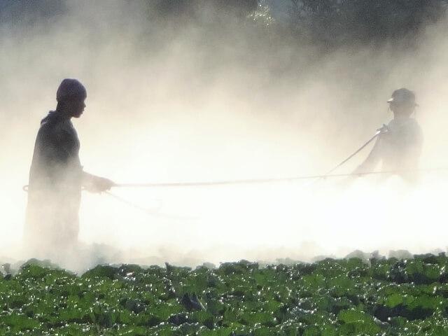 農薬の害・危険性と有機野菜の強み1
