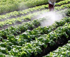 農薬の害・危険性と有機野菜の強み5