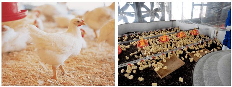 秋川牧園の定期便の口コミ・有機栽培・無農薬栽培野菜と冷凍食品(鶏肉)5