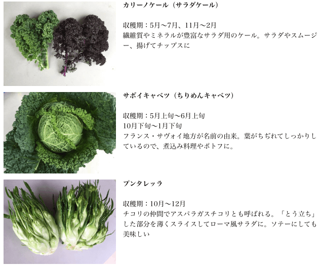 さいたまヨーロッパ野菜の口コミ体験談・感想24