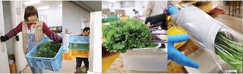 大分県の野菜宅配「ohana本舗」の有機野菜セットの口コミ・評判8