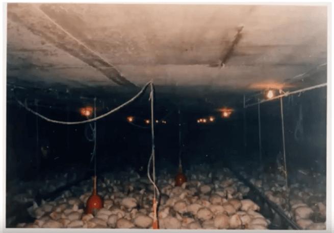黒富士農場の平飼い卵リアルオーガニック卵の口コミ・評判50