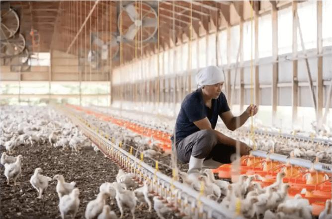秋川牧園の冷凍食品(無投薬鶏肉)の口コミと調理方法20